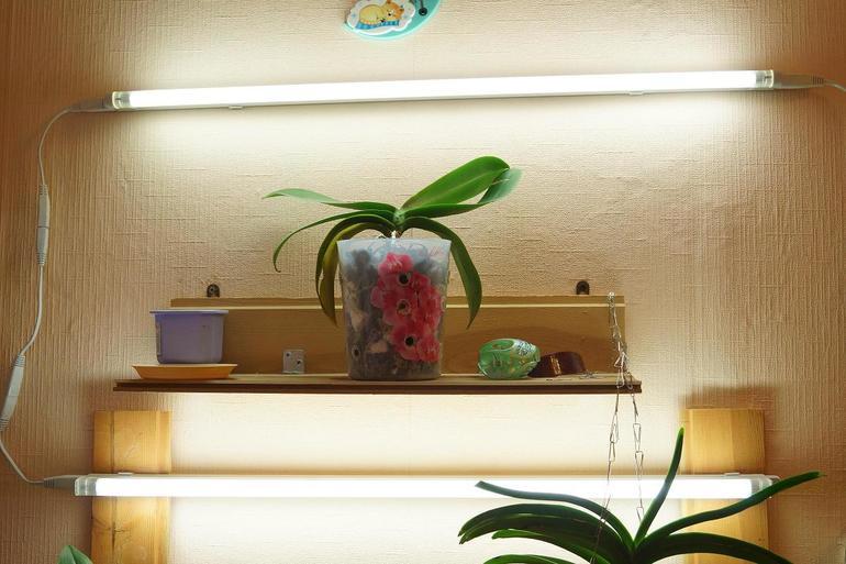 Растение не переносит сквозняков