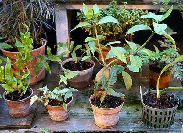 Перепады температурных режимов опасны для растений