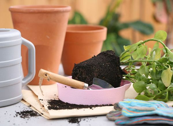 Пересадка – большой стресс для цветущих растений