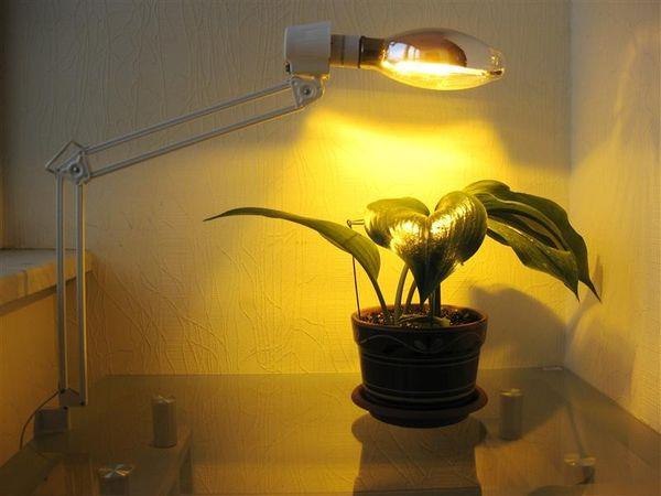 Лампы накаливая - не лучший вариант