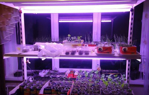 Правильное освещение для фотосинтеза растений