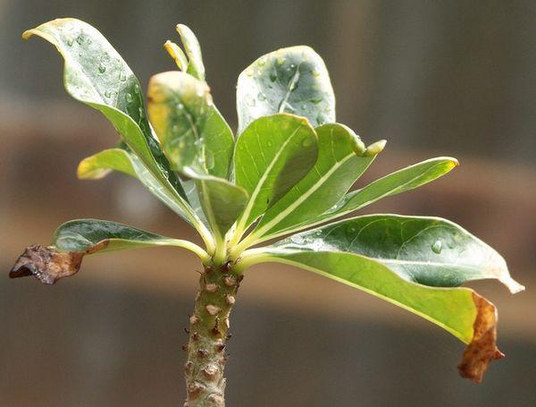 Зимой нужно чаще опрыскивать растения