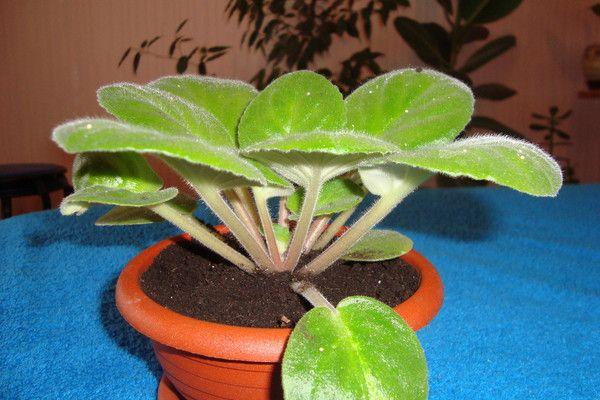 Растению нужна высокая температура