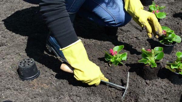 Рассаде нужна температура 21–22 °C