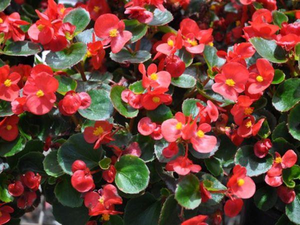 Цветок нужно регулярно подкармливать