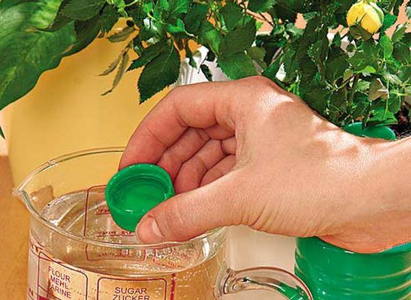 Растения рекомендуют поливать цирконом