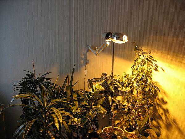 Растениям необходимо много света