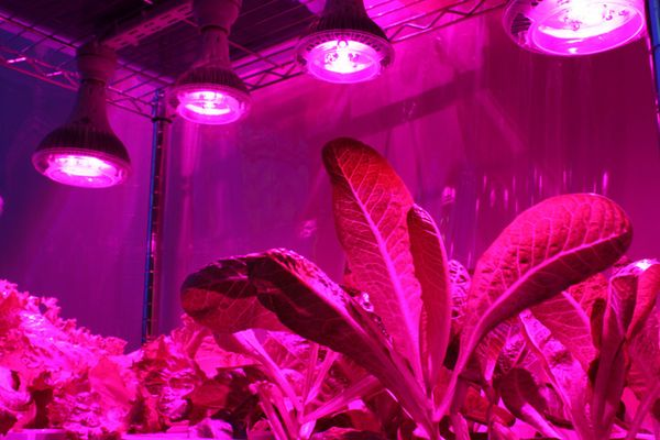 Светодиодные лампы очень популярны