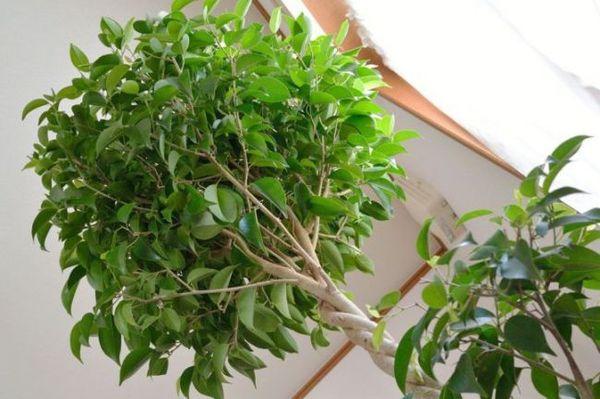 Обрезать нужно стебли и корни