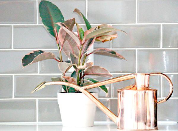 Растение нуждается во влажности в помещении, а не почве