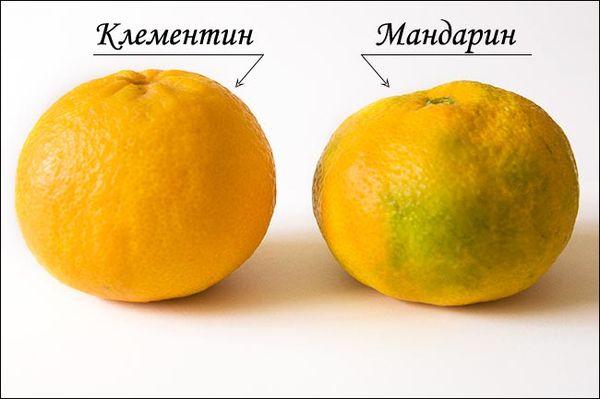 Отличия клементина от мандарина