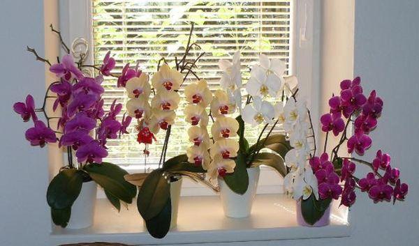 Разные виды орхидей предпочитаются разную температуру