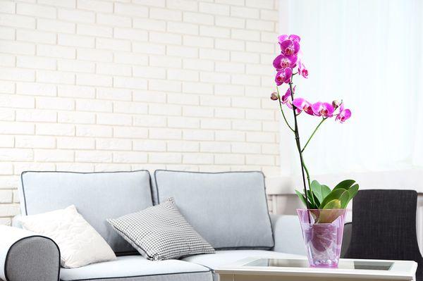 Влажность воздуха важна для орхидеи