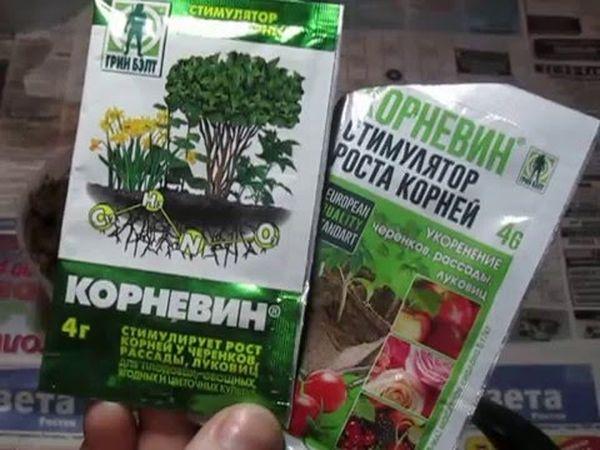 Корневин для орхидей нарастить корни — Все цветы