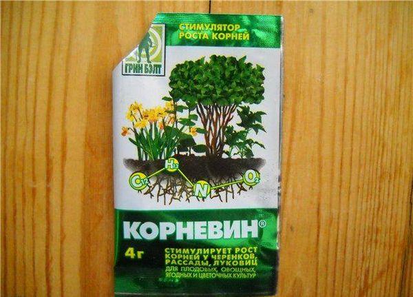 «Корневин» ускорит рост корней