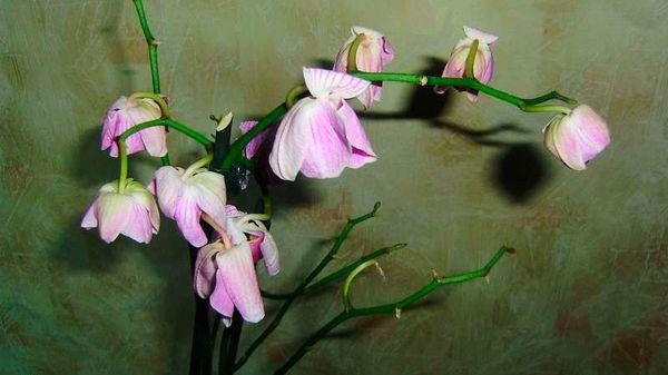 Насекомые влияют на увядание цветов