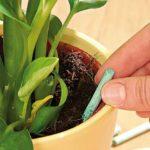 Комнатные растения нужно удобрять