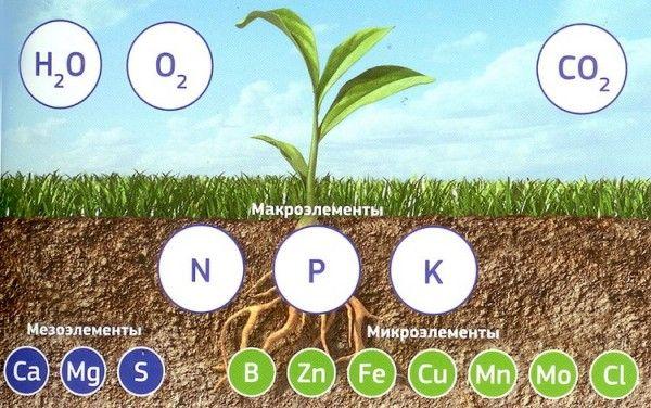 Микроудобрения очень полезны для растений