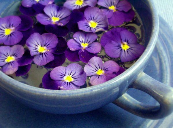 Растение часто применяют в народной медицине