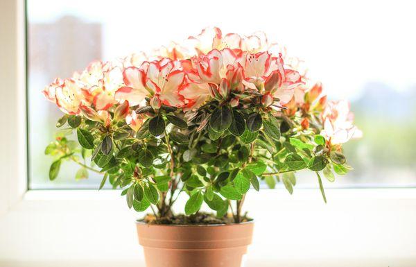 Ставить растение нужно в теплое, осветленное место