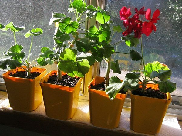 Оптимальный период начала процедур – весна