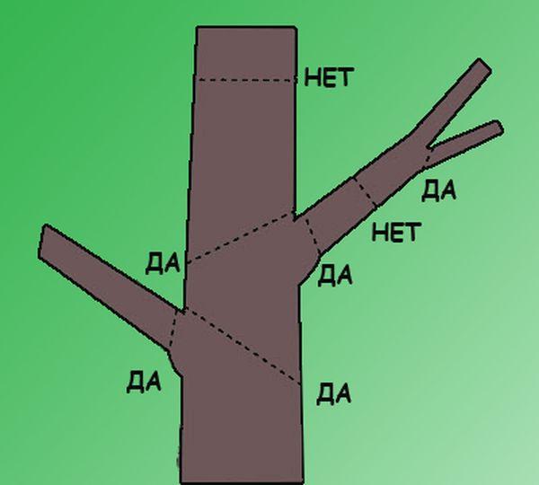Гибискус обрезка схема