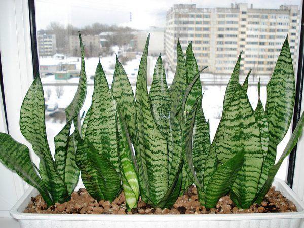 Комнатные растения которые любят тень