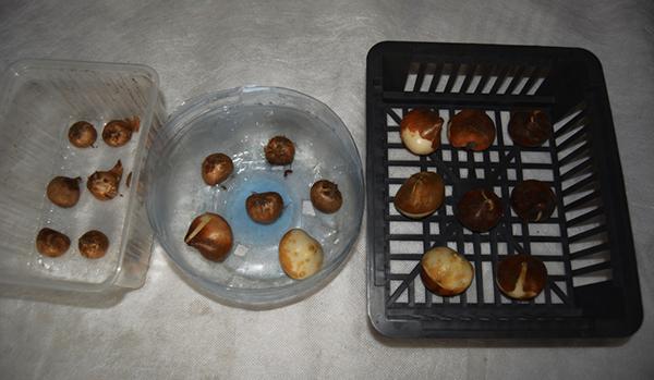 Для посадки луковичных можно использовать пластиковые бутылки и ящики для хранения овощей