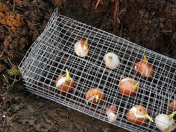 Сетчатая металлическая корзина для посадки луковичных