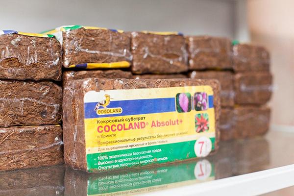 В качестве грунта можно использовать кокосовый субстрат