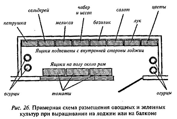 Примерная схема посадки зелени и овощей на балконе
