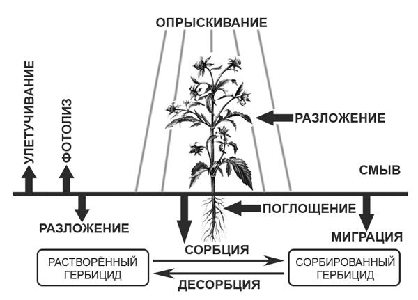 Процессы, происходящие с гербицидами