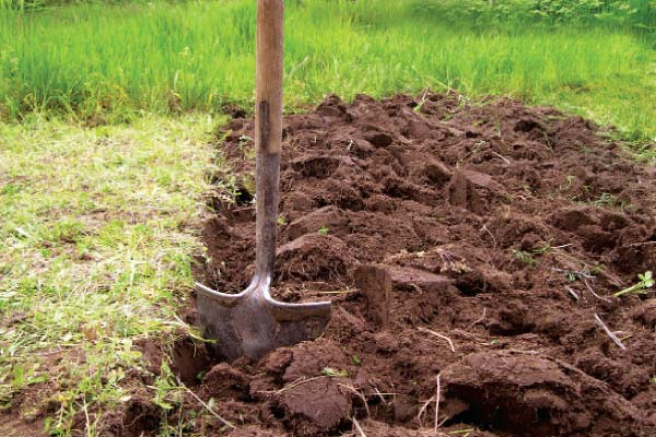 Перекапывая грядку необходимо выбирать корни сорняков