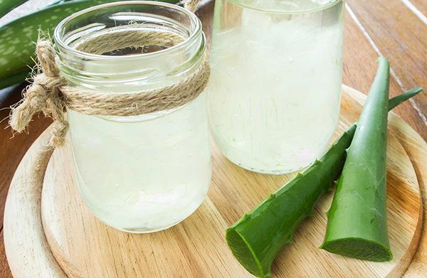 Домашнюю текилу можно приготовить из сока алоэ