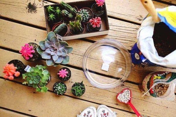 Изготовление флорариума своими руками