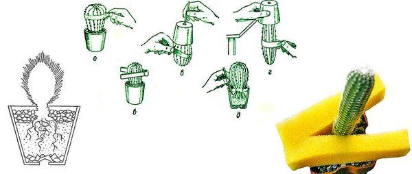 Как правильно доставать растение при пересадке