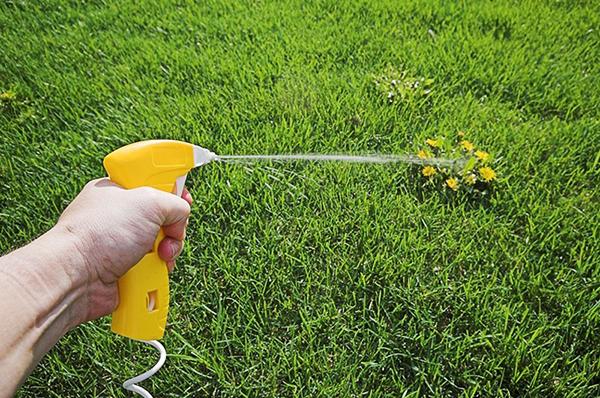 При опрыскивании гербицидами старайтесь попадать точно на сорняк