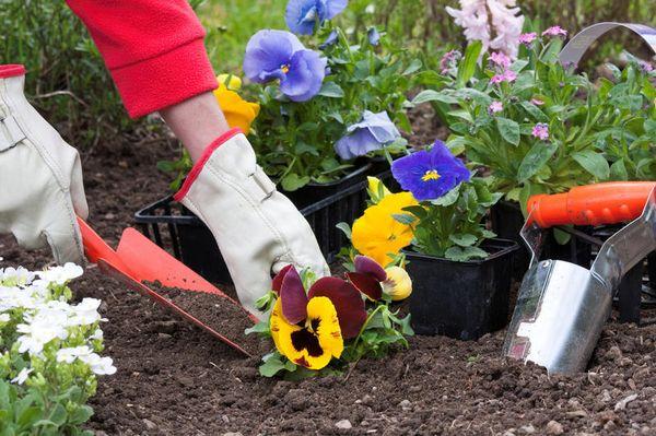 Посадка цветов в саду