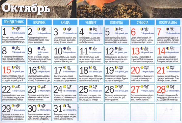 Лунный календарь садовода огородника на октябрь 2018