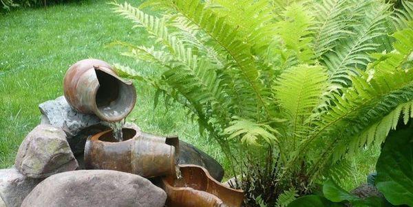 Папоротник может стать украшением сада