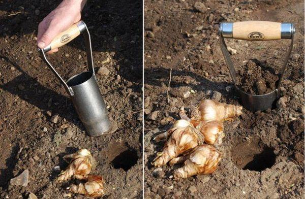 Ручная сажалка для луковичных