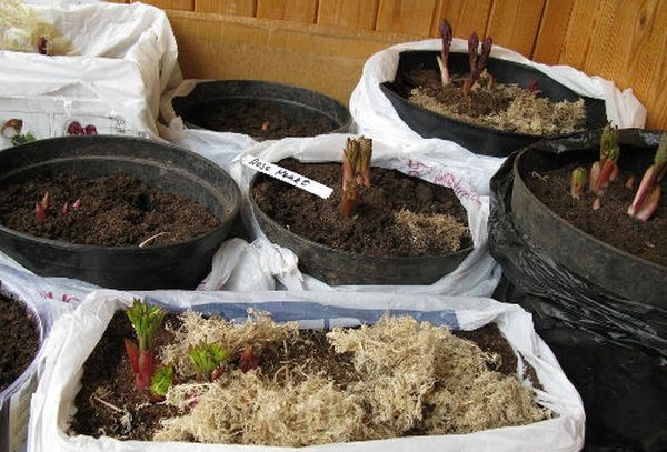 Полив растения выполняется регулярно