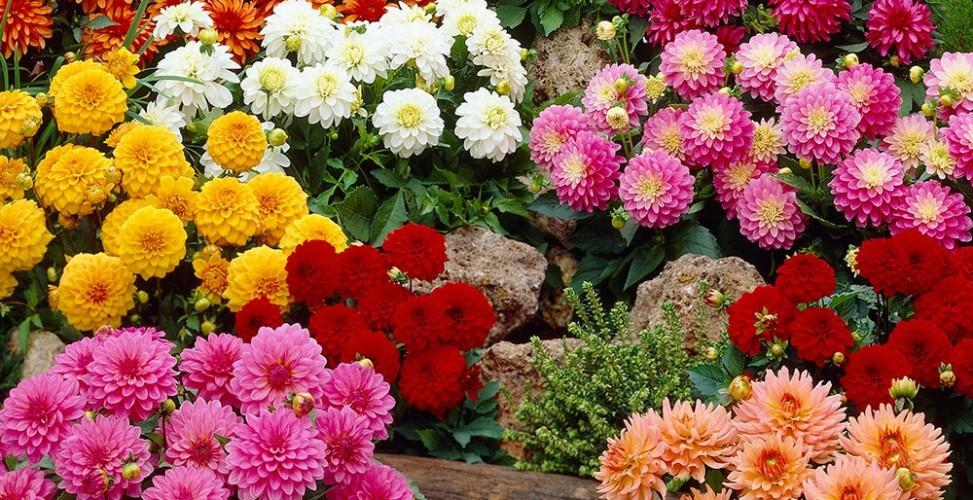 Правильное хранение делянок – важное условие обильного цветения