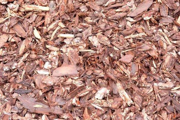 Мульча не должна включать в себя опавшие сухие листья