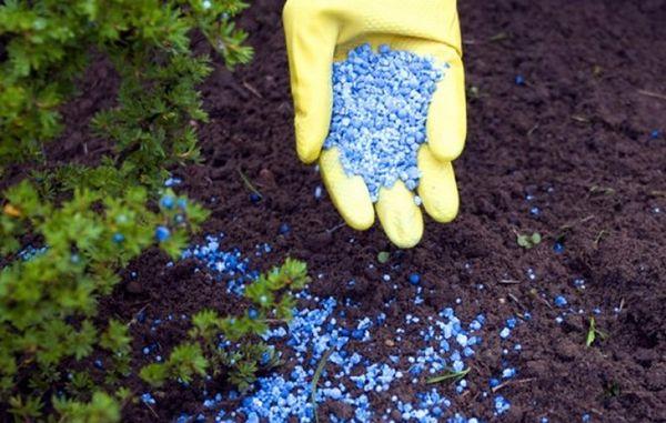 Осенью рыхление и полив обычно совмещают с удобрением почвы