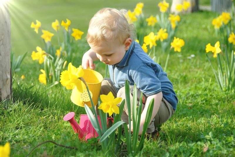 Полив – один из этапов ухода за цветущими культурами