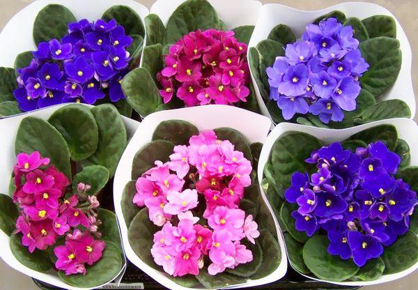 В день новолуния можно только поливать цветы