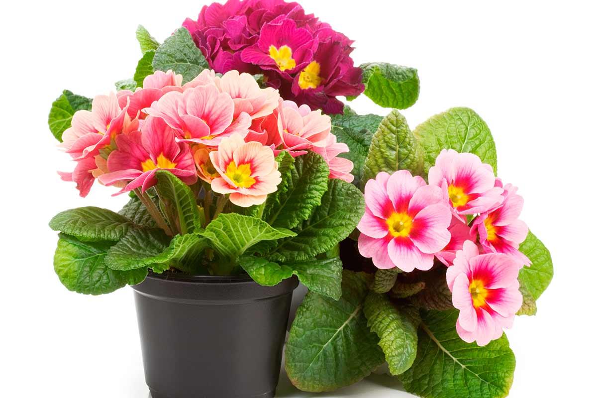 Комнатные растения фото картинки