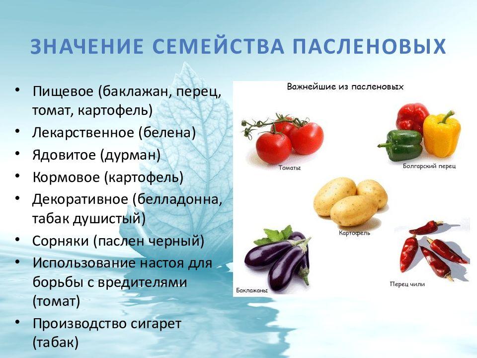 paslenovie_01.jpeg