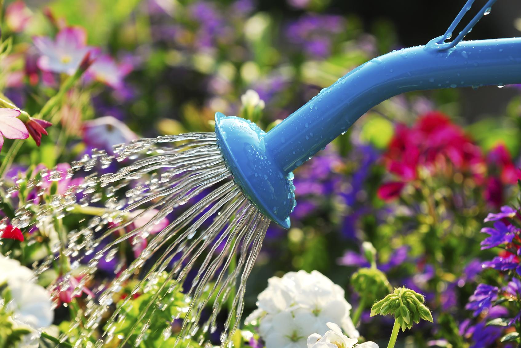Самые красивые сорта Гвоздики- описание и ФОТО